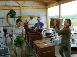 Annie, Rama, Adam, Jeanette, and Josh (not pictured) packing boxes!