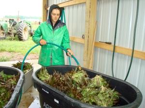 Annie washing lettuce