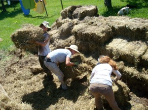 Loading straw for mulching.  96 degrees!