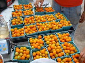 THE BEST CHERRY TOMATOES IN THE WORLD!