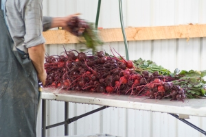 Washing beets.  Photo by Ryan Fedder